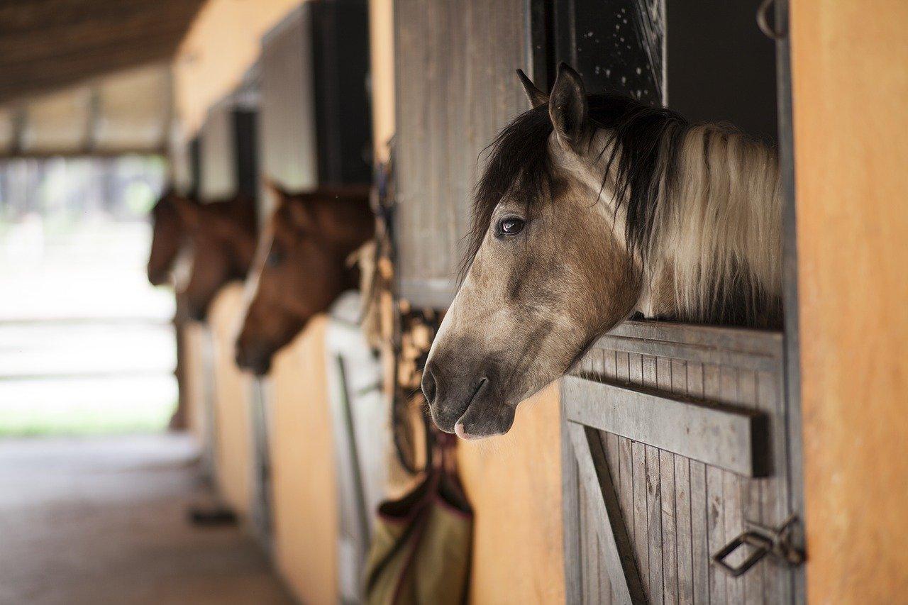 horse-2649609_1280