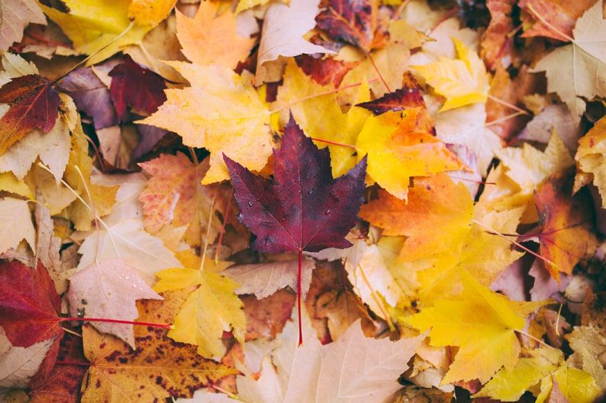 purple-yellow-orange-fall-leaves