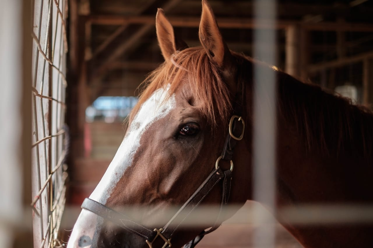 Design Considerations to Keep Your Equine Building Functional Year Round